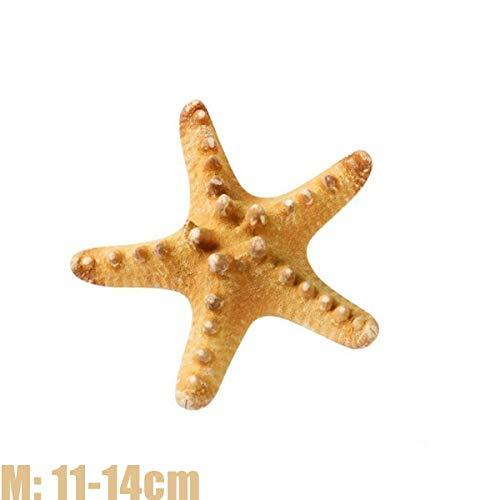 XIAOSI Bedroom Home Decor DIY Craft Beach Cottage Living Room Fish Shells Starfish Dried Sea Stars(2pcs M)
