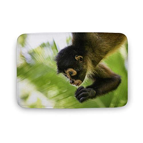 Viowr22iso Alfombra de baño antideslizante, absorbente, linda araña mono salvaje, cómoda, alfombra de baño ultra suave, lavable, 40 x 60 cm