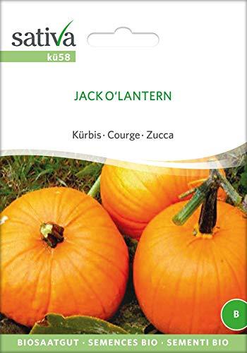 Sativa Rheinau kü58 Kürbis Jack O'Lantern (Bio-Kürbissamen)