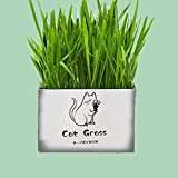AKDSteel Pet Cat Grass Soilless Hydroponic Seed Growing for Oral Cavity Cleaning Wheat Flavor[Pet Supplies]