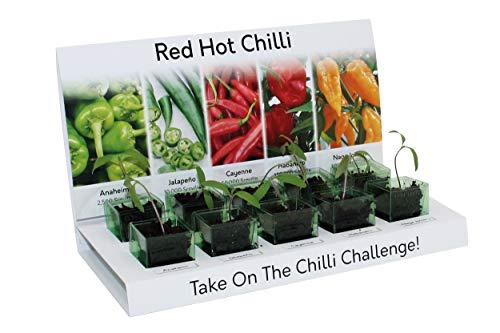 Red Hot Chilli - Kit di 5 piante di peperoncino da coltivare a partire dal seme, 100% riciclabile e realizzato con materiali riciclabili al 100%, idea regalo ecologica