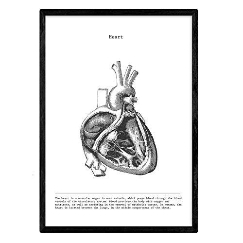 Nacnic Anatomie Poster. Vintage Stil Wanddekoration Abbildung von halbiertes Herz, Muskeln und Knochen. Verschiedene menschliche Körper, Biologie und Medizin Bilder ohne Rahmen. Größe A3.