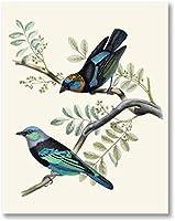 タナガーバードプリントゴールデンフード付きマスクタナジャーヴィンテージイラストポスター鳥のキャンバス絵画レトロな壁アートの装飾写真40x60cmフレームなし