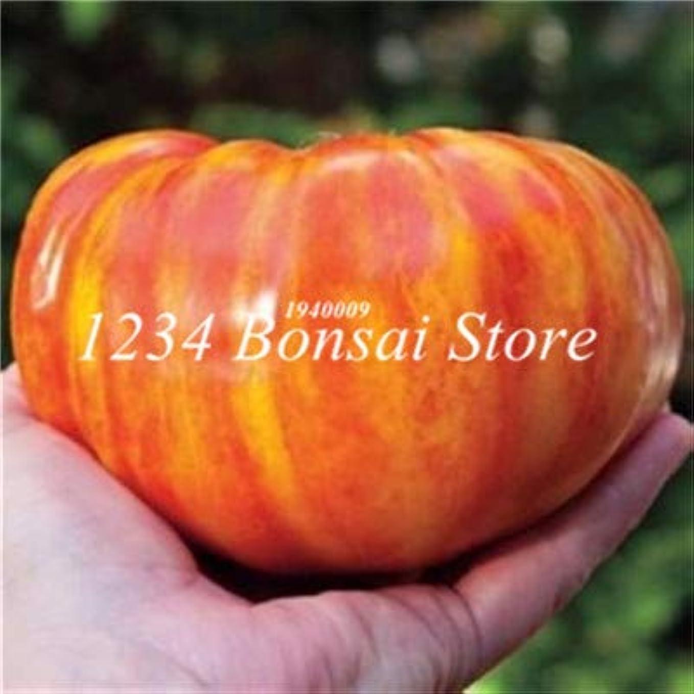 また明日ね金貸したっぷり50pcsのトマト種子巨大なトマトの野菜や果物の種オーガニック家宝種子野菜ハーブ食品
