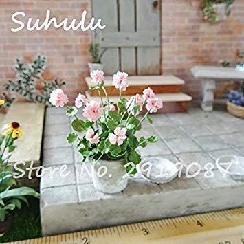Vistaric 100pcs Rare Mini Geranium Graines Vivaces Belles Fleurs Graines Pelargonium Peltatum Graines disponibles bonsaï en pot mélange couleurs 18