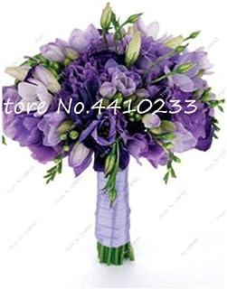 GEOPONICS Semillas: 100 Pcs Freesia Bonsai Plant, No fresia Bulbos flores de las orquídeas de colores Plantación fragante flor de Bonsai magnífico jardín de DIY: v
