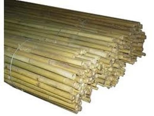 10 canne bamboo bambù pareti divisorie pali pomodori piante rampicanti h. 210 cm diametro 22-24