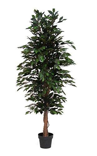 Verdevip Ficus Benjamin Verde - Albero Artificiale Da Arredo Interno Con Tronco Vero - Alto 175 cm - Largo 65 cm