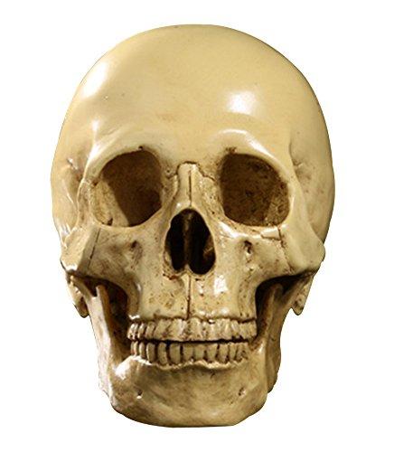 Scala 1: 1 Cranio In Resina Umano Scheletro Decorativo Per Feste Halloween - Giallo