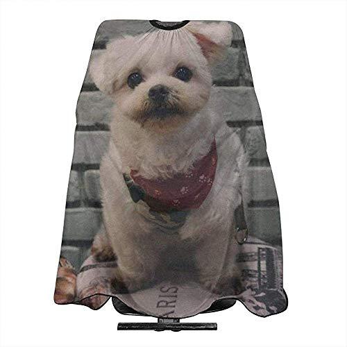 Kurzmantel beige Hund neben grauer Wand-Friseursalon-Schürze, Haar-Schal, verwendbar für Friseursalon oder Haus