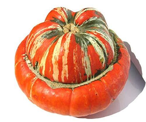 Turban Gourd Turk 10 Graines, coloré, en forme de Buttercup, automne Addition d'affichage
