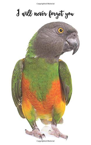 """I will never forget you: Senegal Parrot 