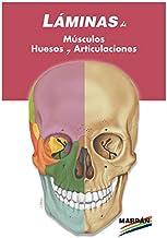 LAMINAS ESPIRAL MUSCULOS HUESOS Y ARTICULACIONES
