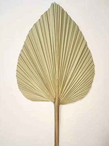 Hojas de palma secas, abanico de hojas de palma de flores naturales, decoración de pared artística, decoración de boda (4)