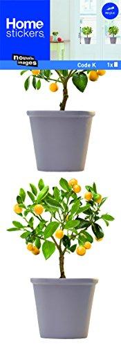 Fönsterklistermärke apelsinträd
