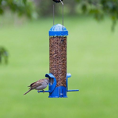 Perky-Pet Mealworm Bird Feeder,Blue
