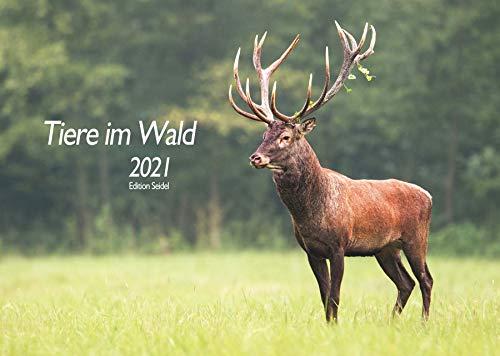 Edition Seidel Tiere im Wald Wildtiere Premium Kalender 2021 DIN A3 Wandkalender Waldtiere