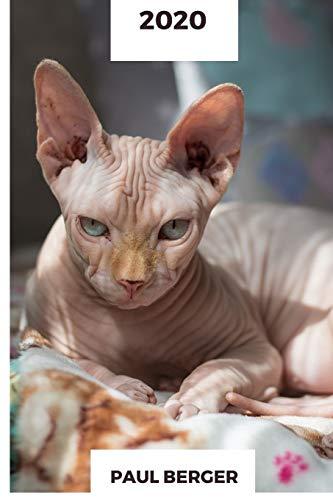 2020: Katze Kalender 2020 Maine Coon Norwegische Waldkatze Bengalkatze Britisch Kurzhaar Siamkatze Ragdoll Savannah Katze Perserkatze Heilige Birma ... Kartäuser Katze Russisch Blau Sphynx Katze