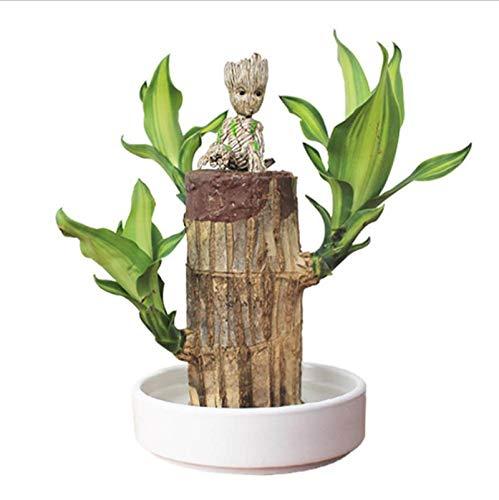 Macetero de madera brasileña + Groot para plantas de aire limpio de buena suerte de madera hidropónica para plantas de escritorio plantas regalos