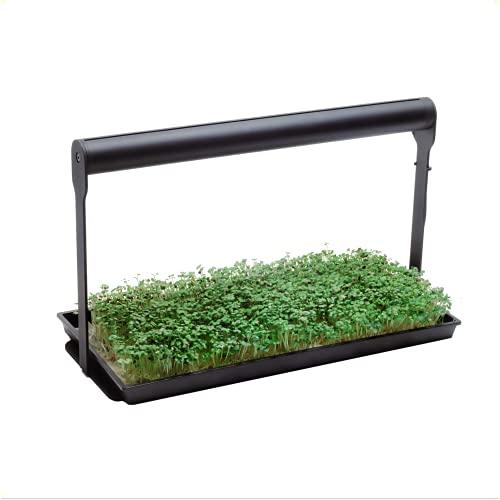 microfarm growing kit