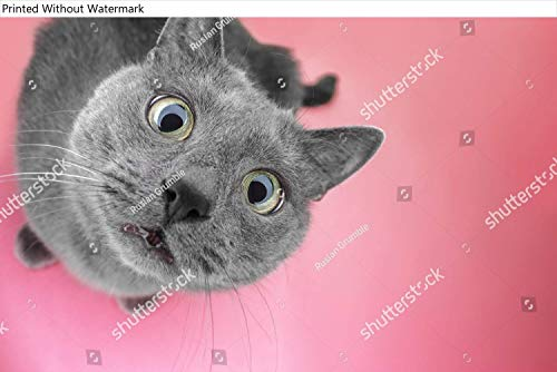 KwikMedia Poster of Grey cat Sitting on The Pink...