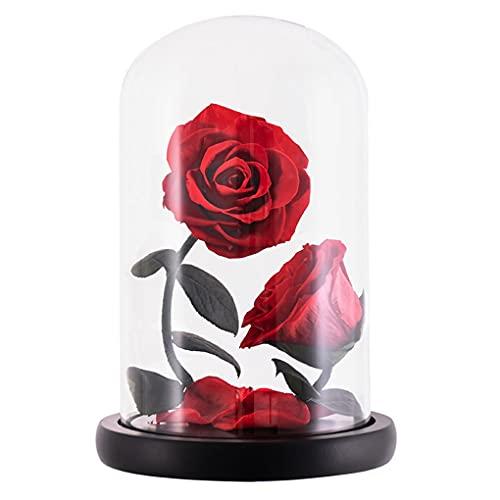 QWERTYUKJ Flor Eterna Bella Y Bestia Rosa Artificiales De Rosas Fresca Decoración Regalo para Ella En El Día San Valentín la Madre Navidad