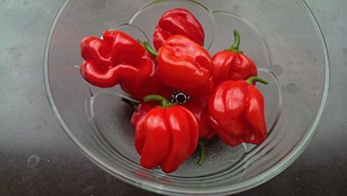 Asklepios-seeds® - 15 graines de Chili Habanero red,piment habanero, piment antillais, piment cabri