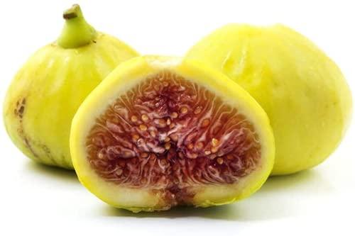 10 pièces Graines de figues jaunes Excellente saveur vivace petits arbres de Ficus Carica graine couleur riche valeur ornementale arbre fruitier d'hiver robuste pour le jardin à la maison