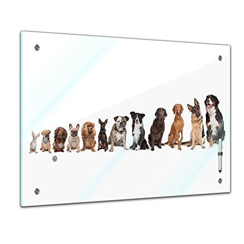 Memoboard 60 x 40 cm, Tiere - Hundebande - Memotafel Pinnwand - Tiermotive - Fellnase - Tierbild - Tier - Haustier - Chihuahua - Dackel - Hund - Hundebild - Pinscher - Collie - Schäferhund