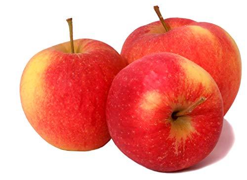 ' Jonagold ' - Bodensee-Apfel vom Rosenhäusle …