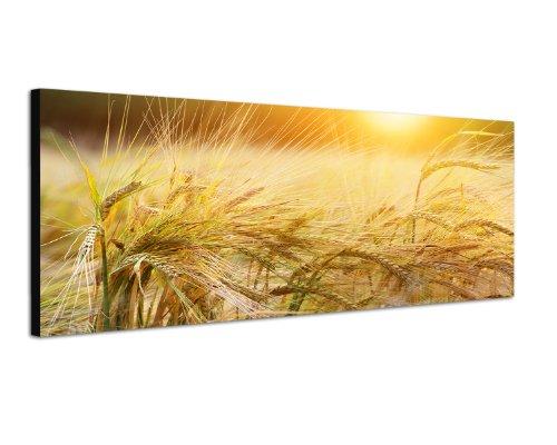Paul Sinus Art Panoramabild auf Leinwand und Keilrahmen 120x40cm Kornfeld Ähren Spätsommer Abendsonne