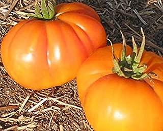 tennessee surprise tomato