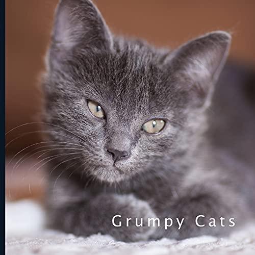 Grumpy Cat Calendar 2022.Moody Muslim Le Meilleur Prix Dans Amazon Savemoney Es