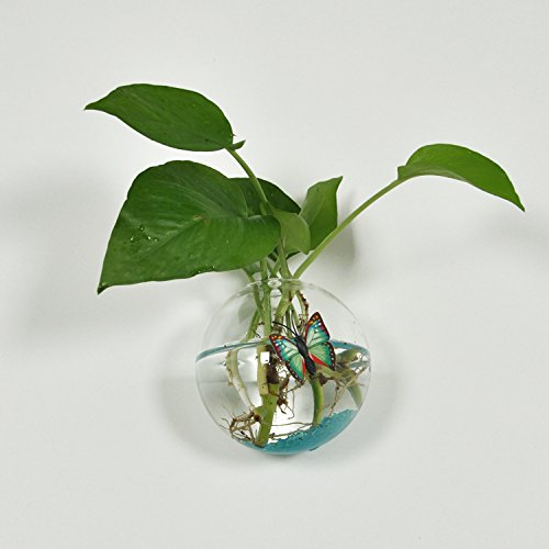 【ノーブランド】植物 花 装飾 花瓶 ボトル ぶら下げ クリア ガラス 壁 水耕栽培 プレゼント 雑貨 飾り 結婚式 容器