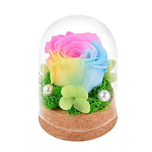 Rainbow Rose in Glass Dome,Beauty and The Beast Eternal Rose Flower Gift for Women, Christmas, Wedding,Valentine's Day, Anniversary and Birthday