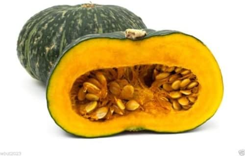 Puerto Houston Mall Rican Indianapolis Mall Pumpkin Calabaza 25 pollinated - Seeds hei Open