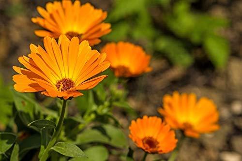 Happy Garden -\