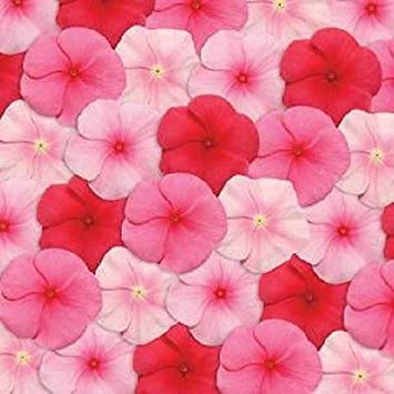 VISA STORE ca Seeds Pacifica XP Lippenstift Mix Samen 50 Samen