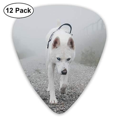 Gitaar Pick witte hond wandelen op weg tussen groene bomen 12 stuk Gitaar Paddle Set gemaakt van milieubescherming ABS materiaal, Geschikt voor gitaren, Quads, enz.
