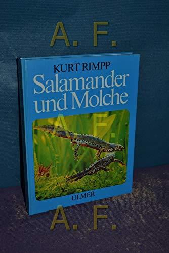 Salamander und Molche : Schwanzlurche im Terrarium.