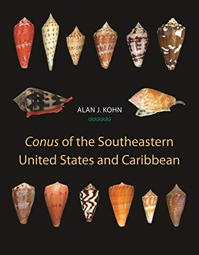 Conus of the Southeastern United States and Caribbean (English Edition)