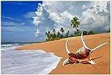 Wallario XXL Poster - Prächtige Muschel am Strand in