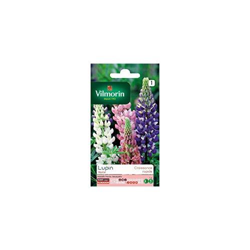 Vilmorin - Sachet graines Lupin annuel en mélange