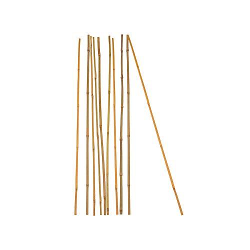 10x Pflanzstab Bambusstab 105 cm x 8 - 10 mm Bambus Rankhilfe Pflanzstab Tonkinstab 100{b064b70cdcf82c16e325f33d08a5cbd85cc25b23e16fceb4f7ca5bb4844c62ab} Naturprodukt Pflanzstäbe Bambusstäbe Bambusstangen