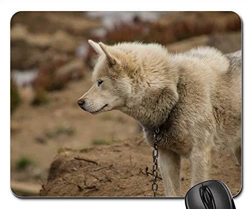 Gaming-Mauspads, Mauspad, Hundeschlitten Hund Grönland Sommer Tier Grönland Hund
