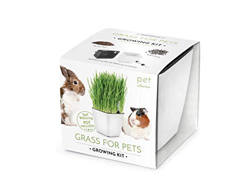Domestico Kit d´Herbes pour Rongeurs prêt-à-pousser, Herbs for Pets growing kit, All-In-One set – pot de fleur auto-irrigant 13x13 cm, graines, substrat frais