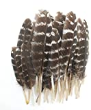 20pcs Turkey Feathers for Crafts Hats Jewelry DIY Wedding Party Decorations Accessories 3.54-5.51 inch