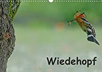 Wiedehopf (Wandkalender 2022 DIN A3 quer): Faszinierende Aufnahmen aus dem Alltag eines Wiedehopfpaares (Monatskalender, 14 Seiten )