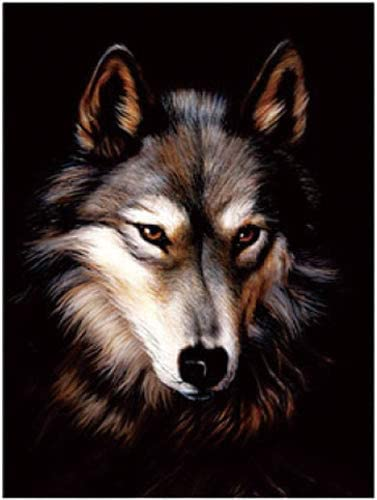 3D LENTICULAR WOLF FLIP PICTURE 400mm x 300mm NEW MIDNIGHT WOLVES