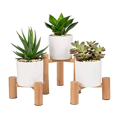 Paisa Home - Mini Plant Stand, Succulent Garden, Cactus Planter, Succulent Stand, Tabletop Plant Stand, Small Plant Stands Indoor, Succulent Holder, Desk Planter, Succulent Plant Stand